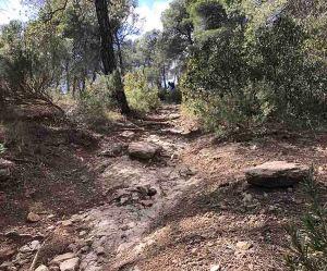sierra-espuna-el-salvaje-arbike-guide